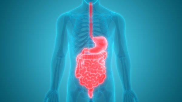 digestion-original-e1505970575969