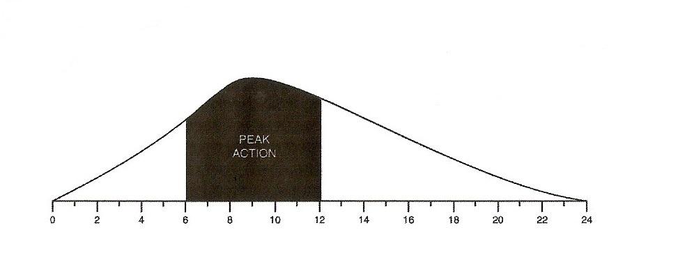 Intermediate-Acting Insulin Curve